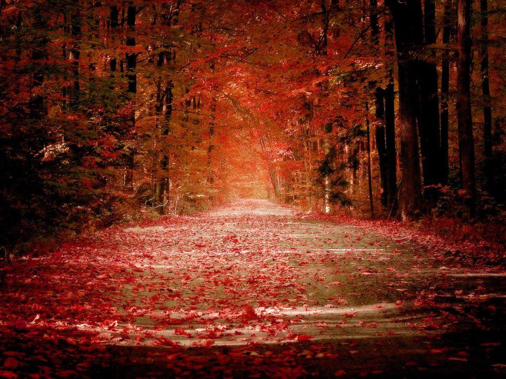 Autumn-Wallpaper-33